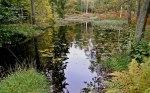 Dammen i Heimarneæsskogen Foto-Dag-Henriksen